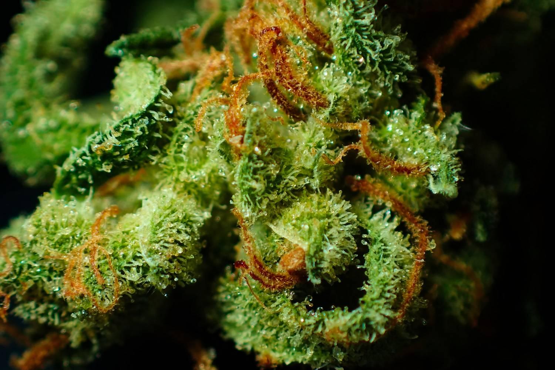 Marihuana lecznicza - gdzie możemy ją kupić?